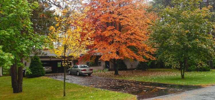 Cuidados para el jardín en el otoño