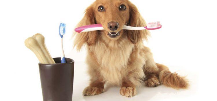 Prácticas dentales saludables para mascotas
