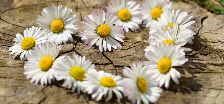 Guía del Jardín de Primavera