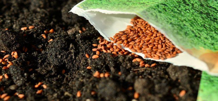 Como empezar a sembrar semillas en interiores para arrancar su jardín
