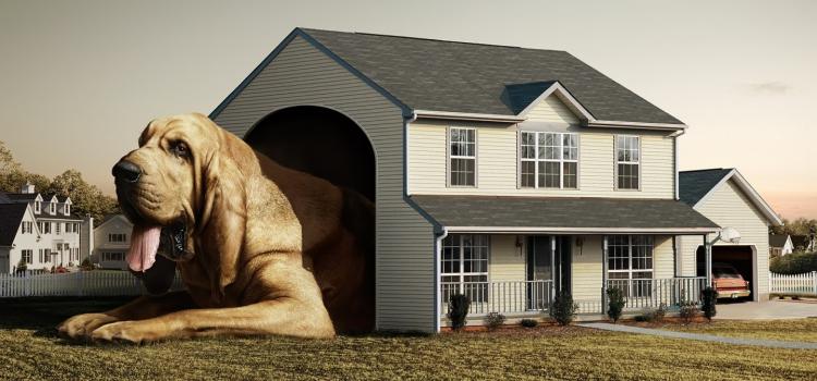 Diseña tu casa pensando en el bienestar familiar y el de tu mascota