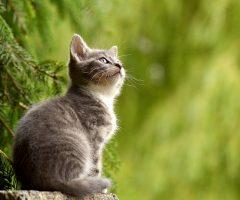 Como evitar que tu gato escape de tu casa
