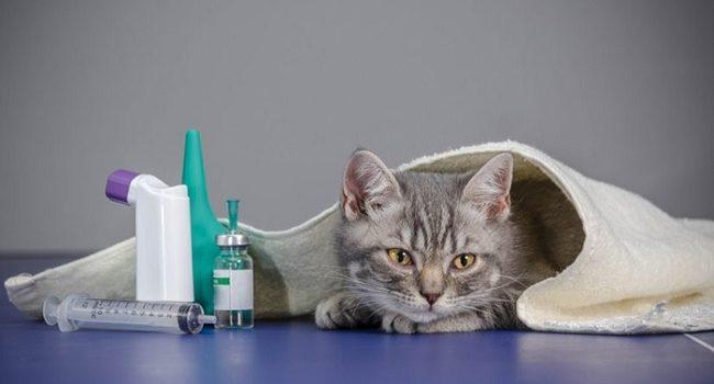 Cuidados para tu gato enfermo, como tratarlo en casa