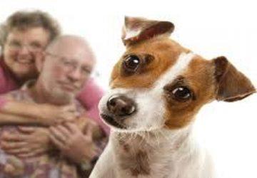 Garrapatas: cuidados para la mascota y sus dueños