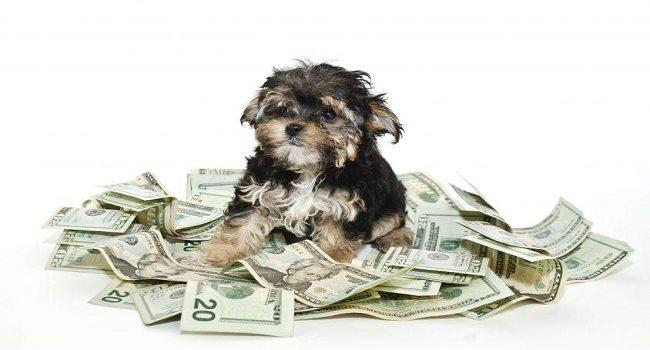 Como mantener saludable tu mascota y ahorrar dinero en el intento
