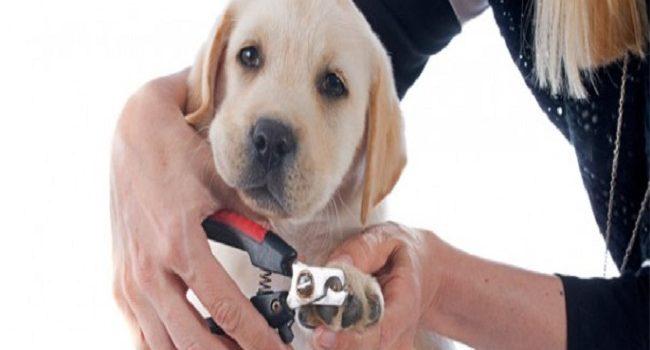 Consejos para cortar las uñas al perro sin molestarlo