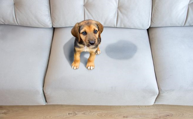 muebles a prueba de mascotas. 1