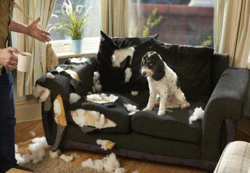 ¿Muebles a prueba de mascotas? te ayudamos a elegir