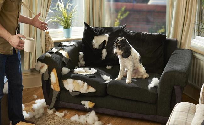 muebles a prueba de mascotas.