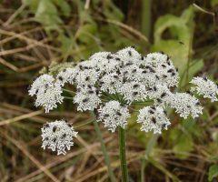 Plantas venenosas que debes evitar en el hogar